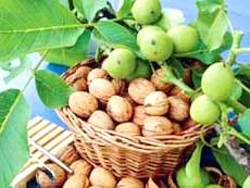 Фото - Настоянка з волоських горіхів