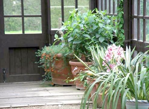 Рослини в зимовому саду