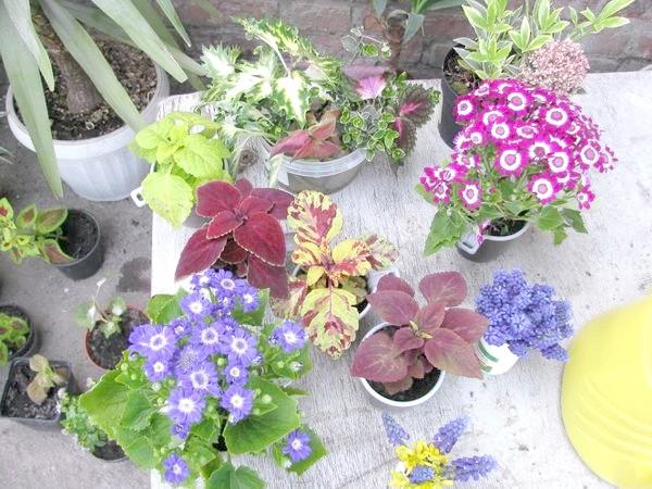 Фото - Загальні рекомендації при висадці квіткової розсади