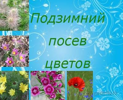 Фото - Особливості підзимового посіву квітів. частина 1