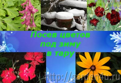 Фото - Особливості підзимового посіву квітів. частина 2. посів у ємності