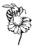 Бджола і пасіка в серпні, догляд за матками