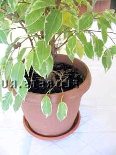 Фото - Пересадка рослин