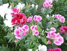 Підбір рослин в саду