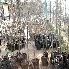 Фото - Правила посадки саджанців плодових дерев, щоб вони не вимерзли за зиму