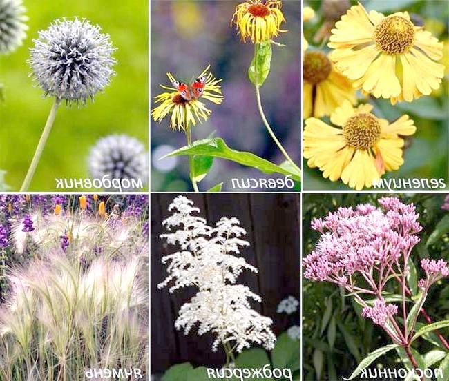 Фото - Рослини для квітника в природному стилі: