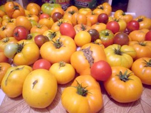 Фото - Найкращі помідори. сорту.
