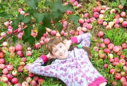 Фото - Збір урожаю яблук і груш. зберігання