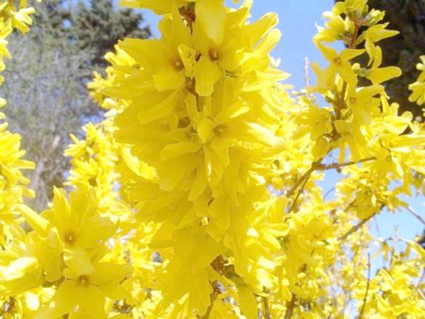 Фото - Сезонні роботи в саду і городі: четвертий тиждень березня