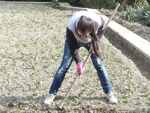 Прополка тюльпанів