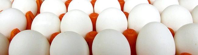 Курячі яйця, agrobk.ru