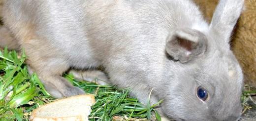 Фото годування кролика до операції, anydaylife.com