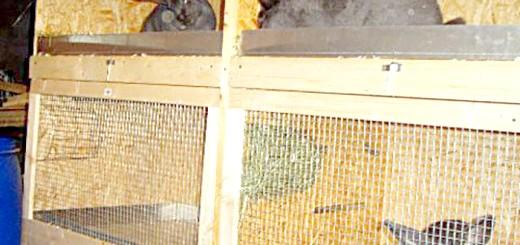 На фото роздільне утримання кроликів, razvedeniekrolikov.ru