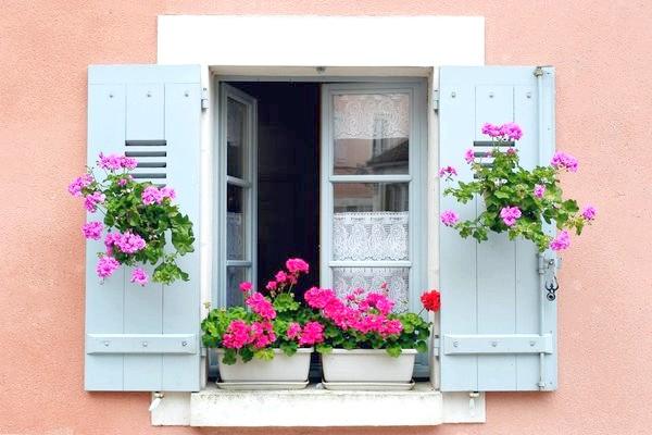 Живі квіти - прикраса будь-якого вікна