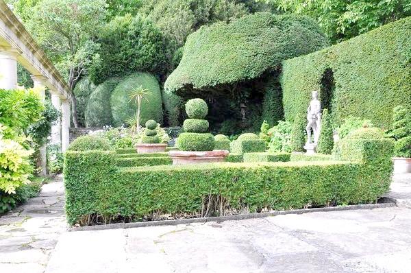 Топіарі - фігури, які живуть у вашому саду