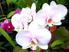 Догляд за квітучої орхідеєю