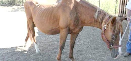 Виснажена вагітна кінь, constantcontact.com