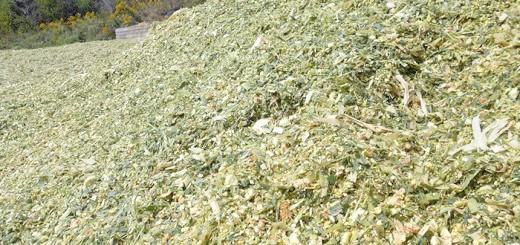 Зображення добірного силосу для коней, allparket.com