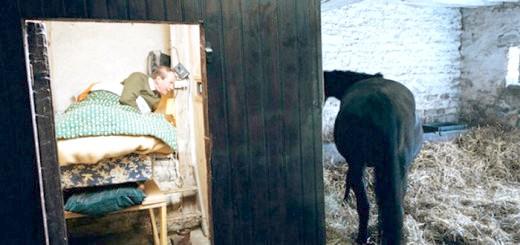 Вагітна кобила під наглядом перед пологами, mtdata.ru