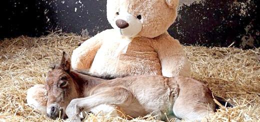 Фотографія новонародженого лошати, livejournal.com