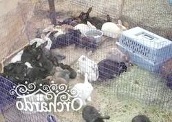 Фото - Варіанти розведення кроликів в домашніх умовах, на дачі і в промислових масштабах