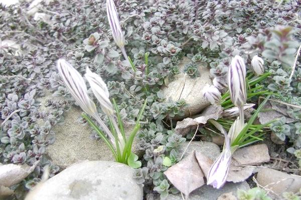 Весна іде! Весні дорогу !!!