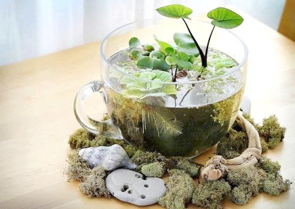 Міні-водойма в чашці