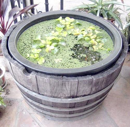 Міні-болітце для саду та тераси