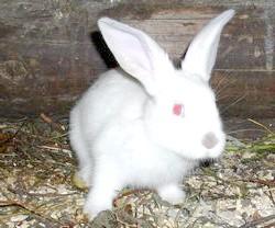 Фото - Можливі проблеми зі здоров'ям у кроликів, як запобігти і чим лікувати?