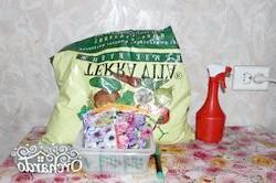 Вирощування розсади петунії своїми руками - відмінний спосіб заощадити і отримати красиві квіти