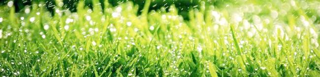 Фото - Що таке партерний газон або в чому феномен партеру