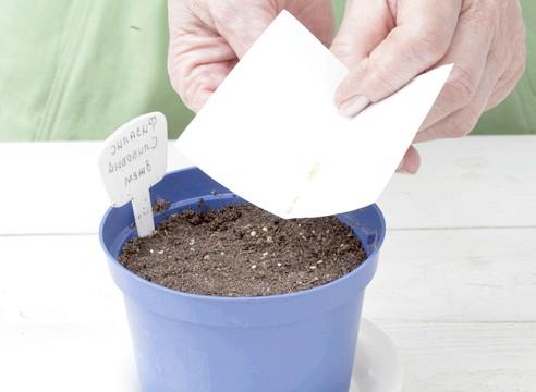 майстер-клас, фізаліс, вирощування розсади, посів насіння на розсаду