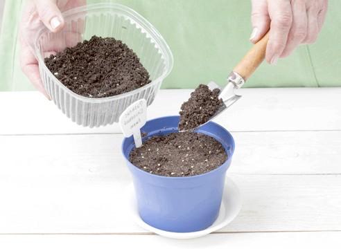 майстер-клас, фізаліс, вирощування розсади, присипка насіння грунтом