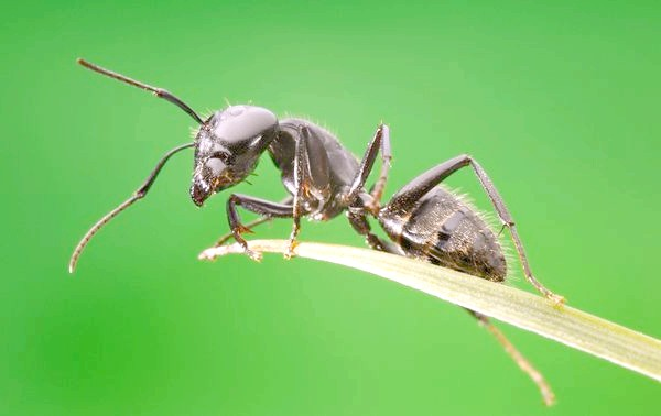 Боротьба з мурашками