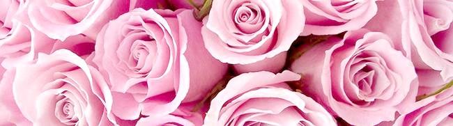 Фото - Як правильно виконати обрізання троянд і підготувати кущ до зими