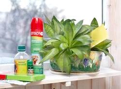 Як застосовувати засоби для боротьби зі шкідниками та хворобами кімнатних рослин