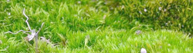 Фото - Мох на газоні або як позбутися надокучливого бур'яну?