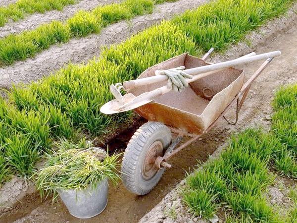 Фото - Органічні добрива з рослин