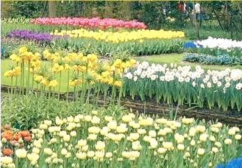 Фото - Осіння посадка цибулинних квітів