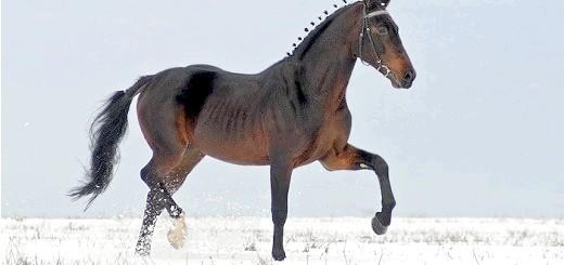 На фото кінь орловський рисак, liveinternet.ru