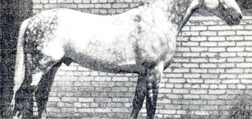 Фотографія орловського рисака Піона, dubrovka.at.ua