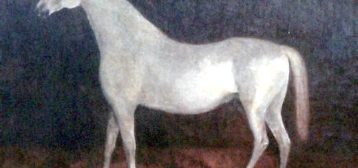 Зображення арабського жеребця Сметанка, wikimedia.org