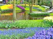 Фото - Свята Нідерландів