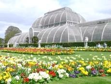 Королівські ботанічні сади Кью