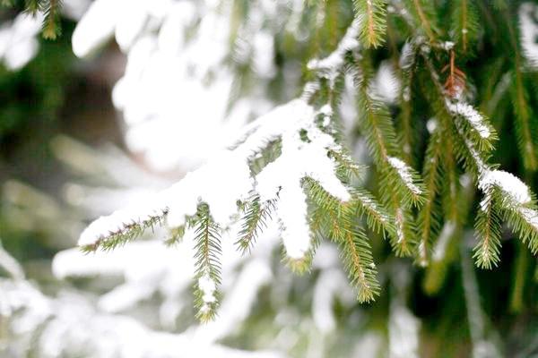 Фото - Сезонні роботи в саду і городі: кінець грудня - початок січня