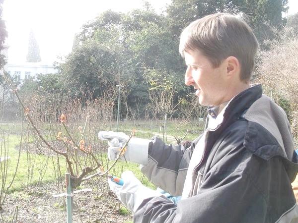 Фото - Сезонні роботи в саду і городі: кінець лютого - початок березня