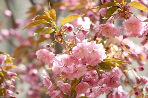 Фото - Сезонні роботи в саду і городі: третій тиждень квітня