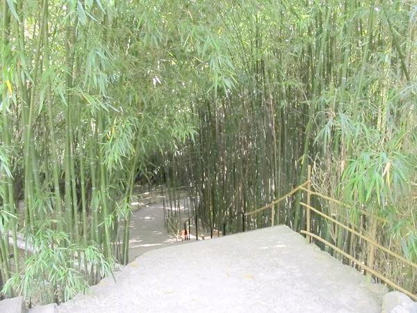 Фото - У бамбуковому гаю приморського парку