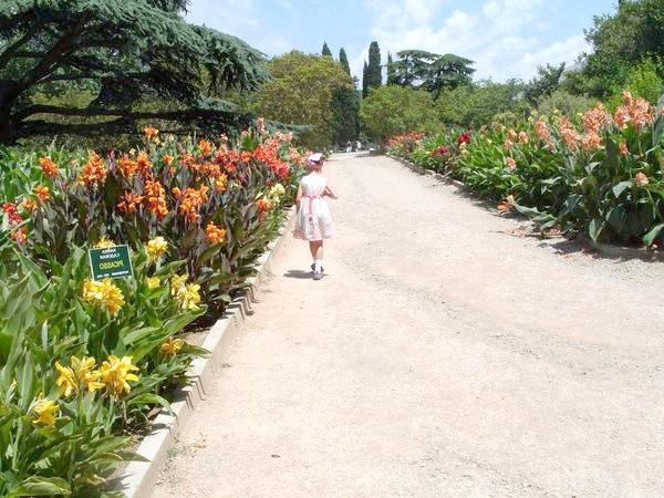 Виставка-експозиція канни садової в Нікітському ботанічному саду