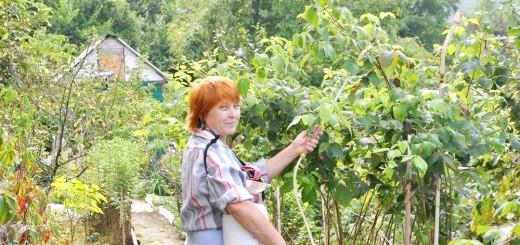 Обробка кущів малини від шкідників, img.superdom.ua
